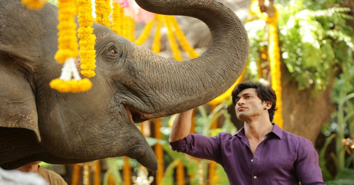 Vidyut Jammwal: It Was The Biggest High Of My Life When The Elephant Understood My Command For The First Time!